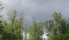 ash dieback in the forest