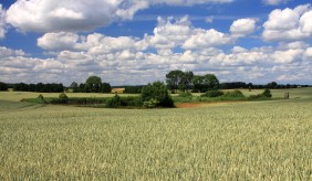 Landscape in Brandenburg