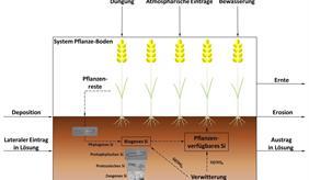 Si-Kreislauf ackerbaulich genutzter Biogeosysteme.