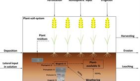 Si cycling in arable systems