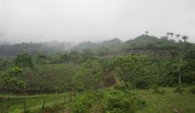 Forest in Colombia