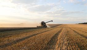 Was nach der Ernte übrig bleibt: wie mit Ernteresten verfahren wird, kann einen großen Einfluss auf die Bodenfruchtbarkeit und die Klimabilanz haben