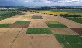 Luftaufnahme des patchCROP-Versuchsfeldes 2020
