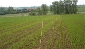 Long-term field experiment