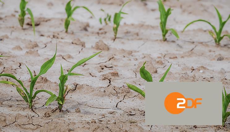 ZDF Dürre 2020
