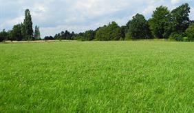 Das Bild zeigt eine grüne Wiese.