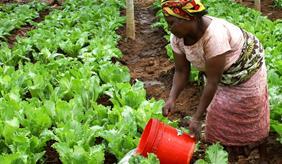 Feldarbeit in Tansania