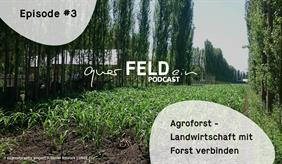 Cover of the new podcast episode on agroforestry