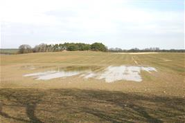 Winter wheat field after heavy rainfall