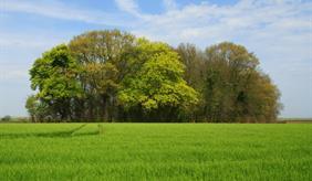 Waldfragment bei Sint-Truiden (Belgien), in dem die Ökosystemleistungen untersucht wurden.