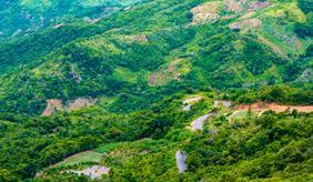 Das Bild zeigt einen Regenwald in Vietnam.