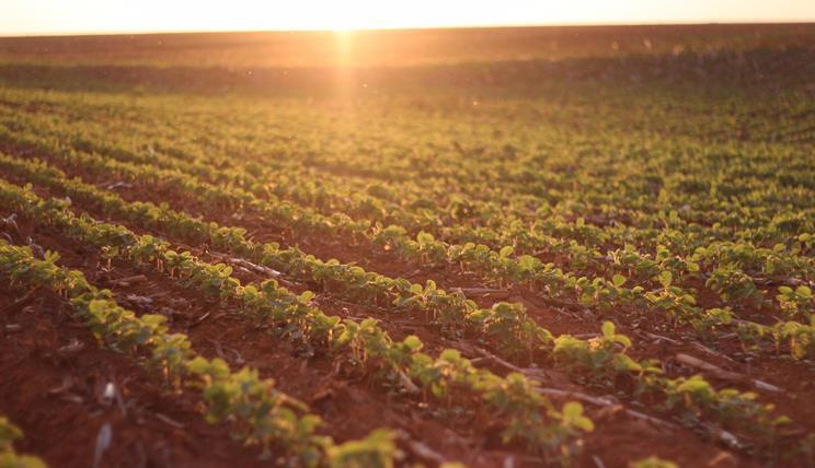 Der Preis des grünen Goldes, Sojafeld, Brasilien