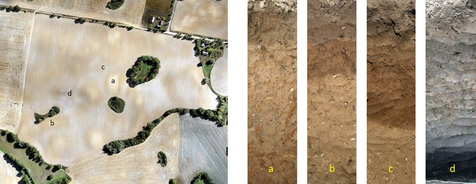 Erosion-affected soil pattern in the Quillow catchment. Copyright: M. Wehrhan, ZALF