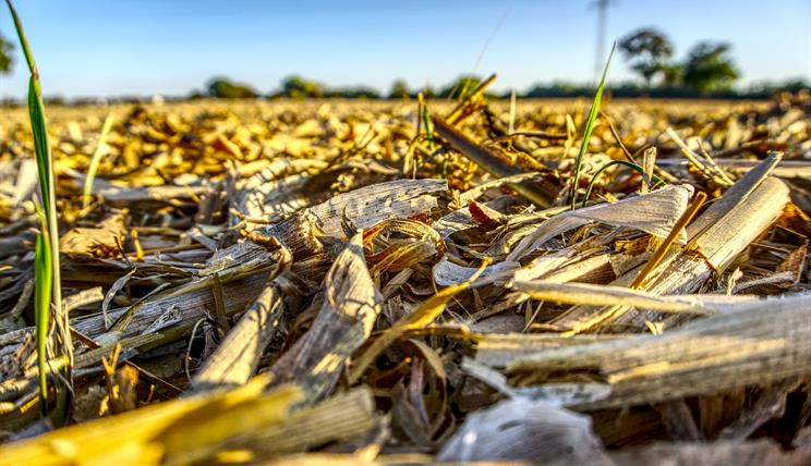 Usage of crop residues for bioenergy
