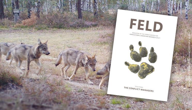 FELD Cover 2 2020